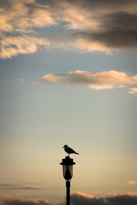 grand marais seagul #mynorthshore