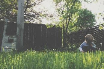 Back yard, dandelion searching.
