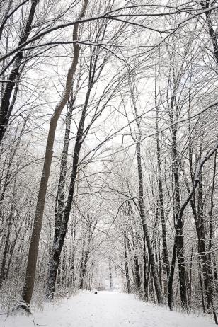 winter, photographer, minnesota, mn, outdoors, snow, twin cities, think tank, samsung, galaxy, elm creek, photography, hiking